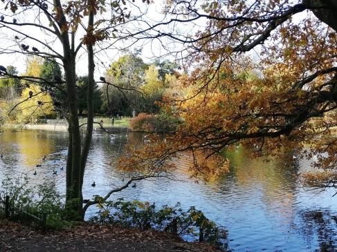 Autumn Stroll 1