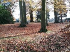 Autumn Stroll 14-10-18