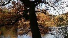 Autumn Stroll 5